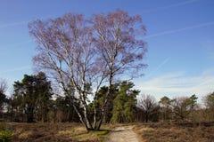 Tierra natural Strabrechtse Heide fotografía de archivo