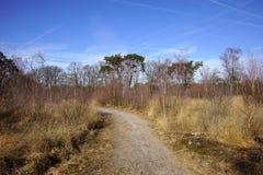 Tierra natural Strabrechtse Heide imagen de archivo