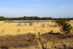 Tierra natural Strabrechtse Heide imagenes de archivo