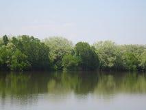 Tierra pantanosa Imagen de archivo libre de regalías