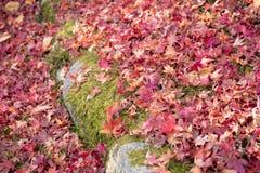 Tierra roja de la caída de la hoja, Autumn Kyoto Japan Fotos de archivo