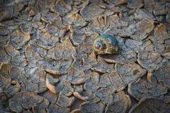 Tierra seca agrietada sin el agua Fotos de archivo