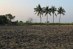 Tierra seca con el árbol de coco y el cielo azul fotografía de archivo