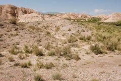 Tierra seca, pequeños arbustos de la meseta de la montaña en el día soleado Foto de archivo
