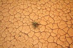 Tierra secada Fotos de archivo