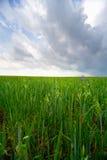 Tierra y cielo: hierba Imágenes de archivo libres de regalías