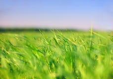 Tierra y cielo: hierba Fotografía de archivo libre de regalías