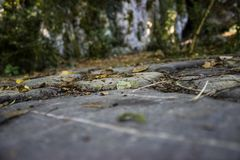 Tierra y follaje de piedra fotografía de archivo libre de regalías