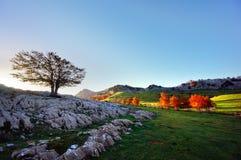 Tierras de Arraba en Gorbea con el árbol solo Imagen de archivo