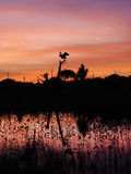 Tierras de la garza de gran azul en árbol muerto en puesta del sol hermosa Fotos de archivo libres de regalías