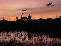 Tierras de la garza de gran azul en árbol muerto en puesta del sol hermosa Fotografía de archivo