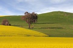 Tierras de labrantío agrícolas Foto de archivo