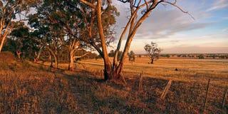 Tierras de labrantío australianas Fotografía de archivo