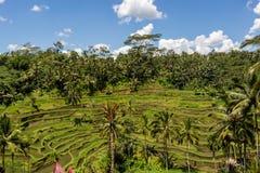 Tierras de labrantío colgantes verdes enormes en Bali Foto de archivo