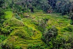 Tierras de labrantío colgantes verdes enormes en Bali fotos de archivo libres de regalías