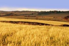 Tierras de labrantío con las cosechas del cereal Foto de archivo libre de regalías