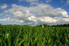 Tierras de labrantío de desaparición (campo de maíz y casa con la urbanización Fotos de archivo libres de regalías