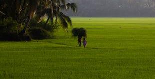 Tierras de labrantío de Kuttanad Imagen de archivo libre de regalías