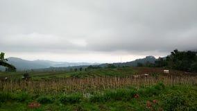 Tierras de labrantío en el pueblo, extensión del verdor