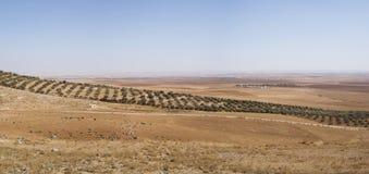 Tierras de labrantío en Jordania Foto de archivo libre de regalías