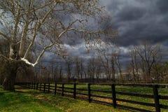 Tierras de labrantío enormes de Hudson Valley NY del árbol del sicómoro Fotografía de archivo libre de regalías