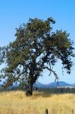 Tierras de labrantío, Goldendale, WA Foto de archivo libre de regalías