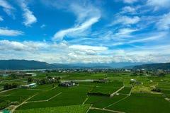 Tierras de labrantío pacíficas para los arroces de arroz y loto que cultiva debajo de un cielo del verano en el condado de Yunlin imagen de archivo libre de regalías