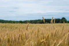 Tierras de labrantío rurales del condado de York Pennsylvania del país, en un día de verano Imágenes de archivo libres de regalías