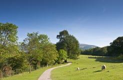 Tierras de labrantío rurales idílicas, Reino Unido Foto de archivo