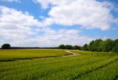 Tierras de labrantío verdes claras de la agricultura Fotos de archivo