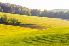 Tierras de labrantío verdes en primavera Concepto del herbicida Fondo de la hierba fotografía de archivo libre de regalías