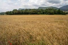 Tierras del cereal Foto de archivo