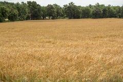 Tierras del cereal Imagen de archivo