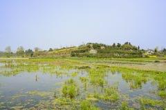 Tierras irrigadas llenas de yerbajos antes de la colina arbolada en primavera soleada Foto de archivo