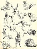 Tiersammlung lizenzfreie abbildung