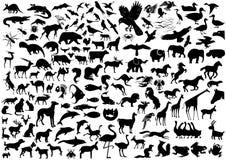 Tierschattenbilder Stockbild