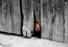 Tierschlechte behandlung. Stockfotografie