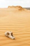 Tierscull in der Sandwüste Stockfotografie