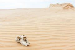 Tierscull in der Sandwüste Lizenzfreies Stockbild