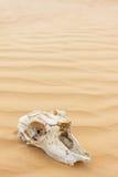 Tierscull in der Sandwüste Lizenzfreie Stockfotografie