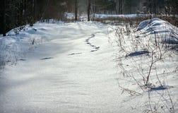 Tierspuren im Schnee Stockfoto