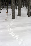 Tierspuren im Schnee Stockfotos