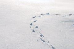 Tierspuren im Schnee Stockbilder