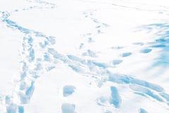 Tierspuren im Schnee Lizenzfreie Stockfotos