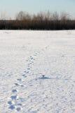 Tierspuren im Schnee Stockbild