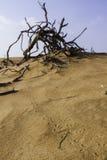 Tierspuren im Wüstensand Lizenzfreies Stockbild