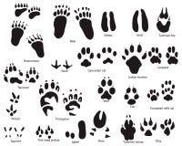 Tierspuren mit Namen vektor abbildung