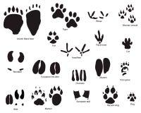 Tierspuren mit Namen Stockbild