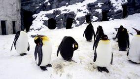 Tierstand und Schlaf Penquin im Winter schneit Lizenzfreie Stockfotos