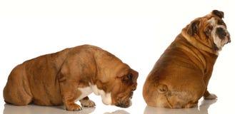 Tierverhalten lizenzfreie stockfotografie